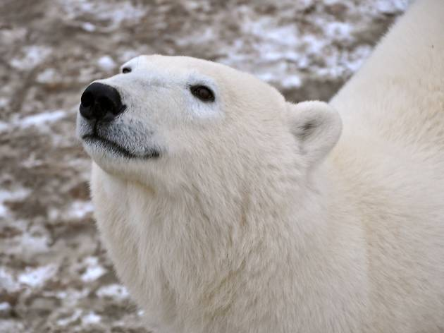 Travel to the Arctic without leaving the city