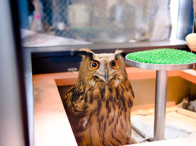 WISE OWL HOSTELS