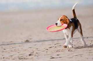 platges gossos