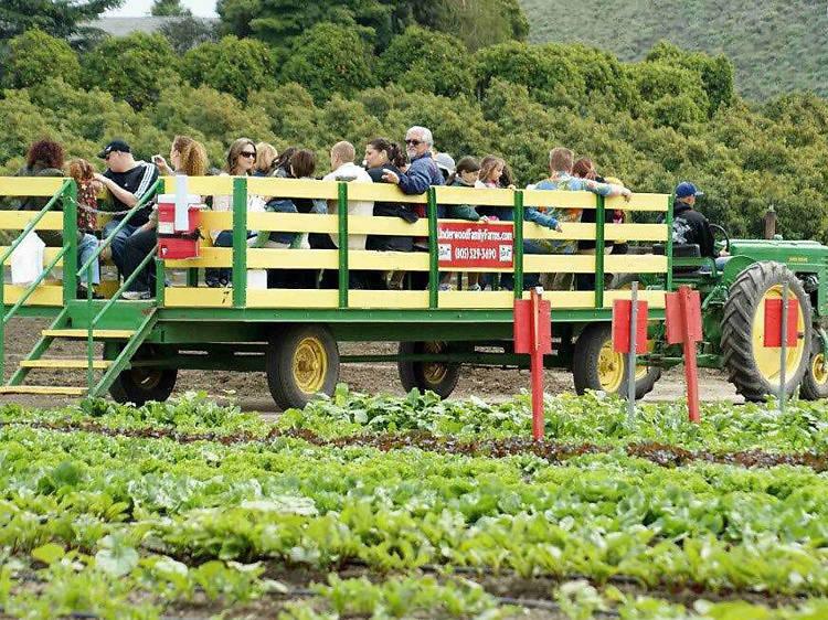 Underwood Family Farms