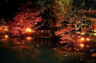Happo-en Autumn Lightup | Time Out Tokyo