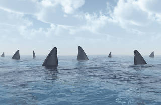 Six sharks were spotted at a Jersey Shore beach
