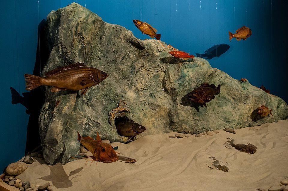 Dubrovnik Natural History Museum