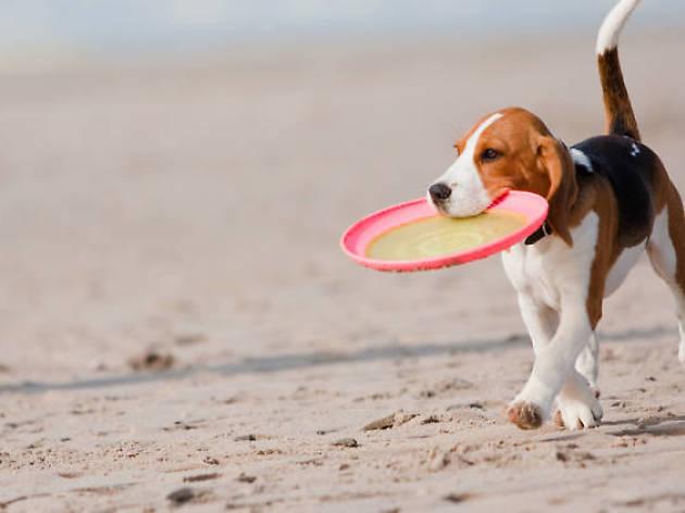 ¿A qué playas puedo ir con mi perro este verano?