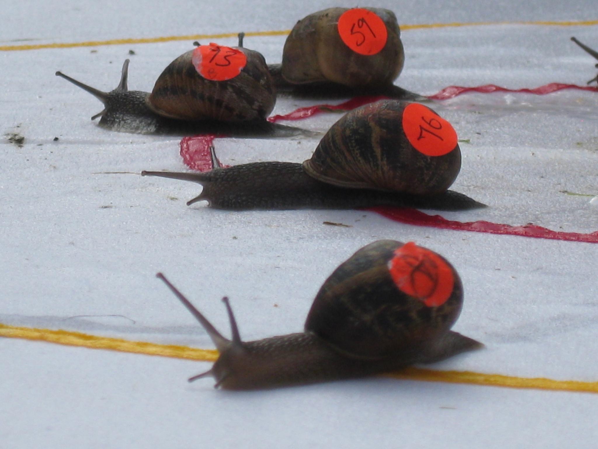17 reasons to visit Norfolk, World Snail Racing