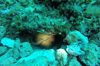 Adriatic diving centre