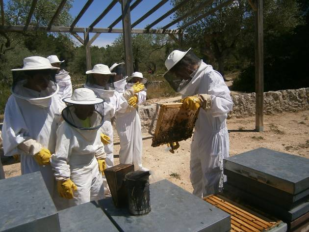 A study centre on the world of bees