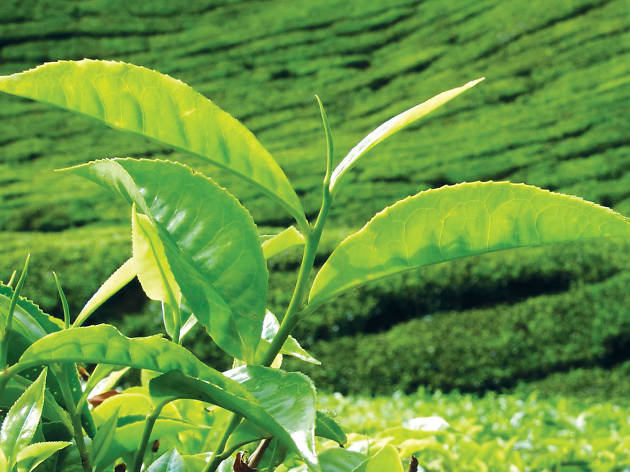 Sri Lanka's tea districts