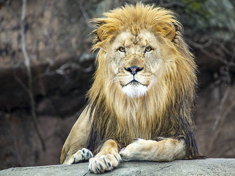 See animals (for free!) at Lincoln Park Zoo