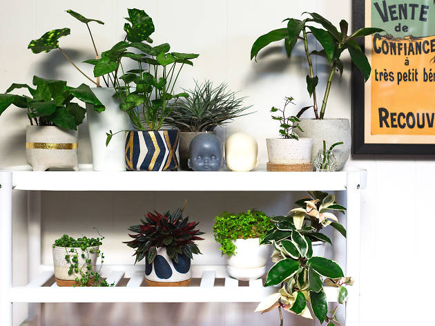 Indoor plants on a shelf
