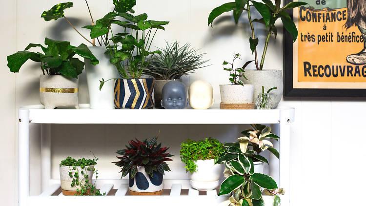 Indoor plants on a shelf