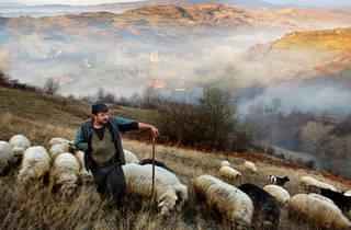 (Mitchell Kanashkevich:  Shepherd, Maramures, Romania. Winner, Faces, People & Encounters 2015)