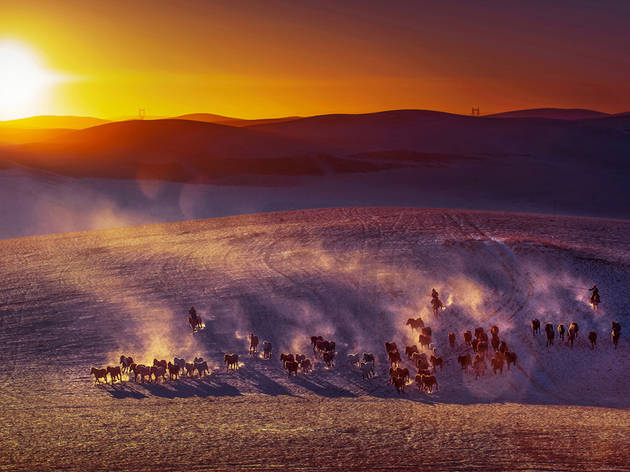 (Cai Zhiping:  Horses on plain, Inner Mongolia, China.  Highly Commended, Moment in Light 2015)