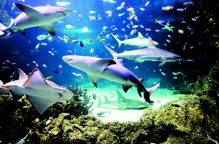sharks and fish swimming in a huge aquarium
