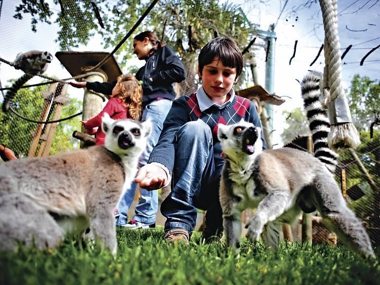 Vídeos, visitas e muitas actividades com plantas e animais