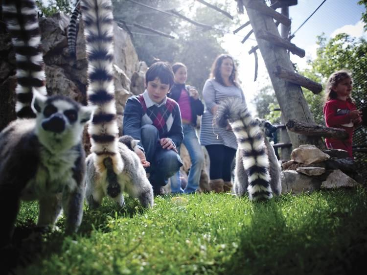 The best outdoor activities in Lisbon for kids