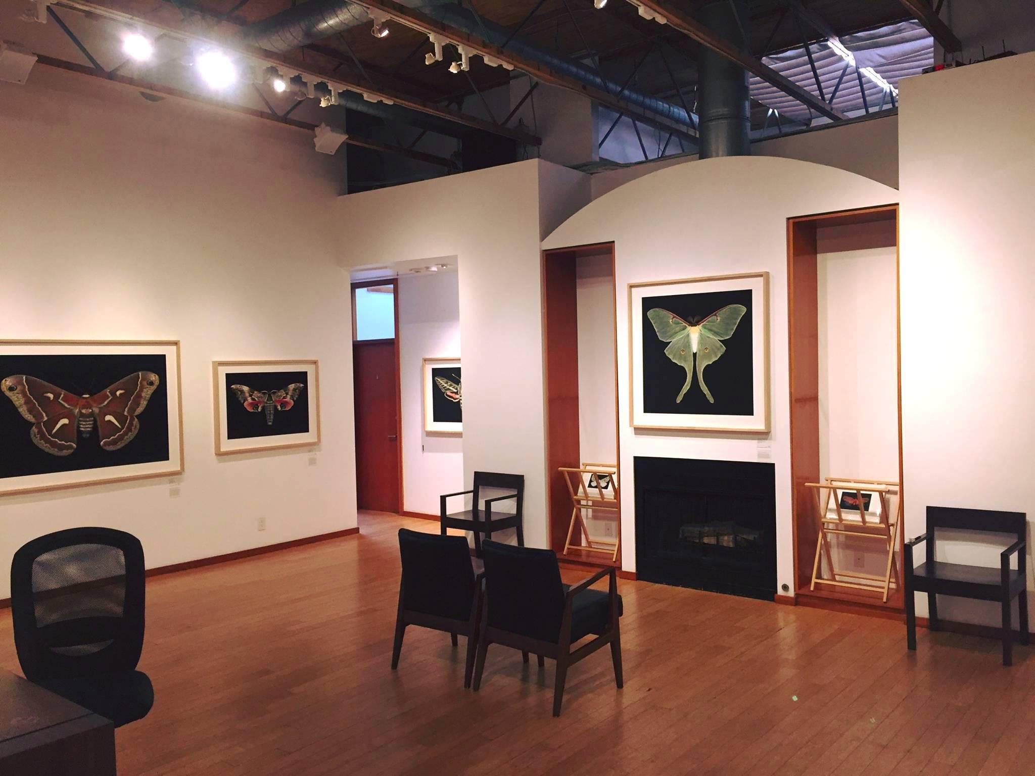 G2 Gallery