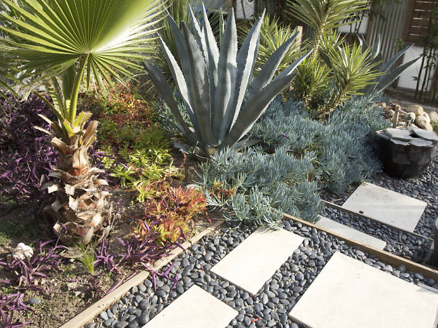 drought gardening with succulents
