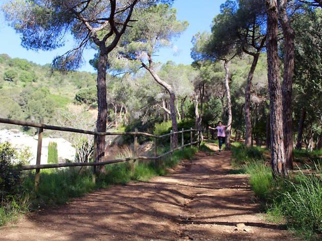 Bosc de Can Sentmenat