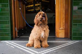 Beresford Dog Show