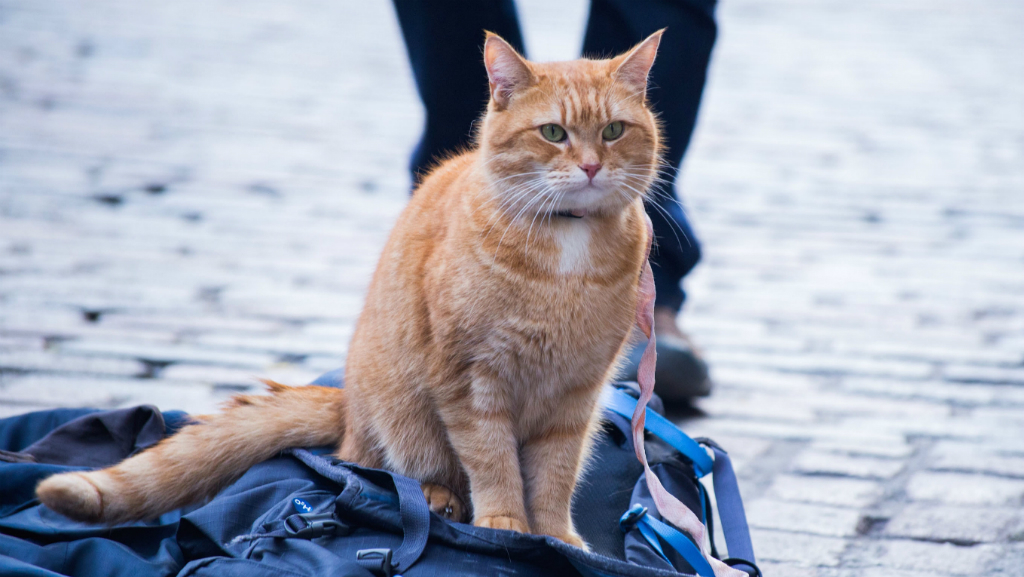 Films to watch before the end of 2016: A Street Cat Named Bob