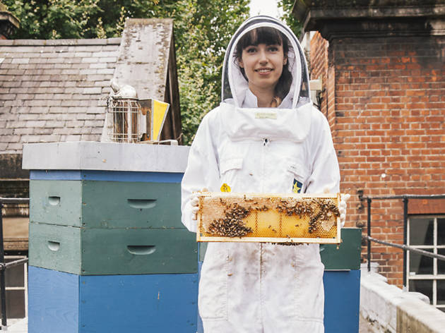 Quit your job, become a... beekeeper