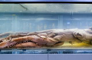 Ten weird and fascinating things every Londoner needs to see at... the Natural History Museum