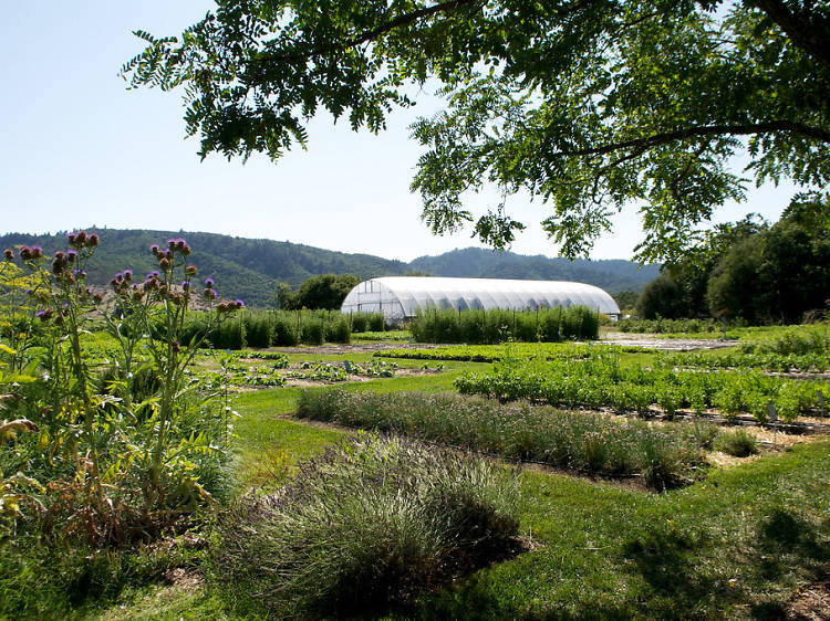 The French Laundry garden