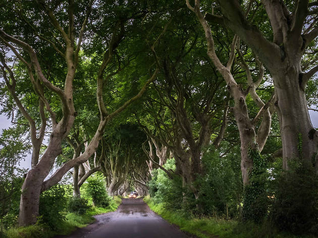 dark hedges, belfast