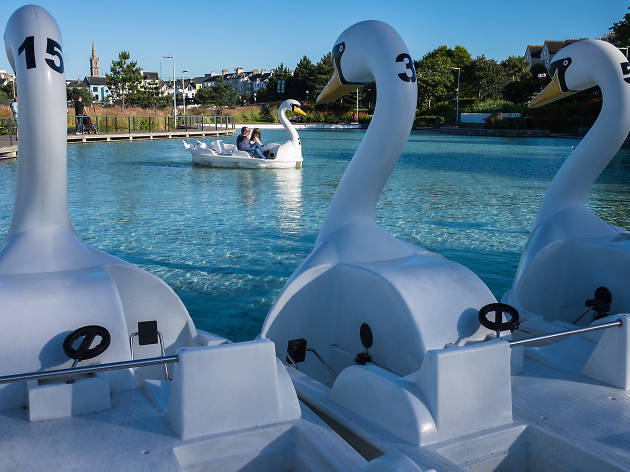 bangor swan lake, belfast