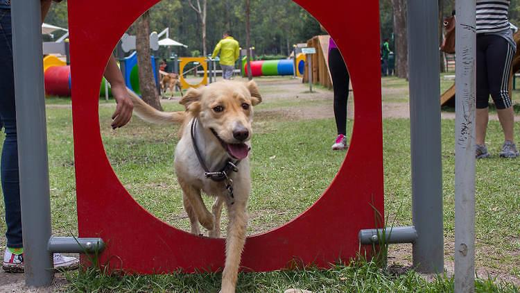 Parques para perros en la Ciudad de México