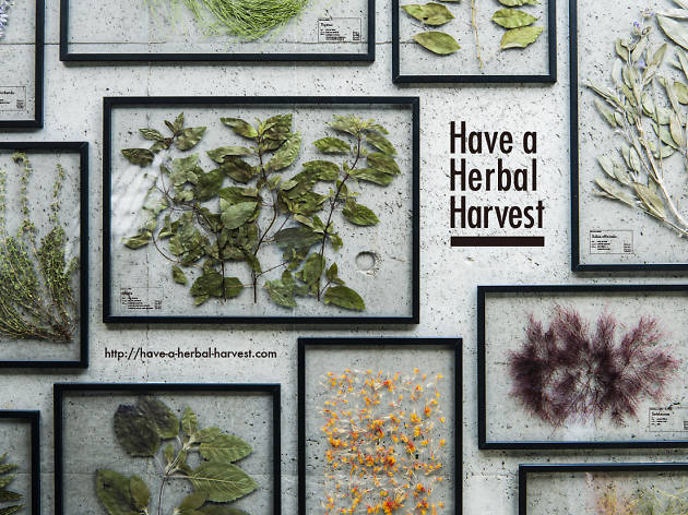 Have a Herbal Harvest「Herbal Laboratory 2016」