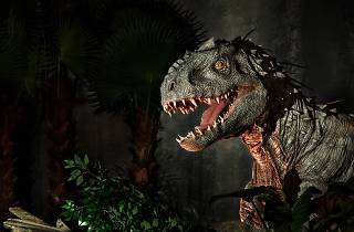 Indominus Rex at Jurassic World: The Exhibition