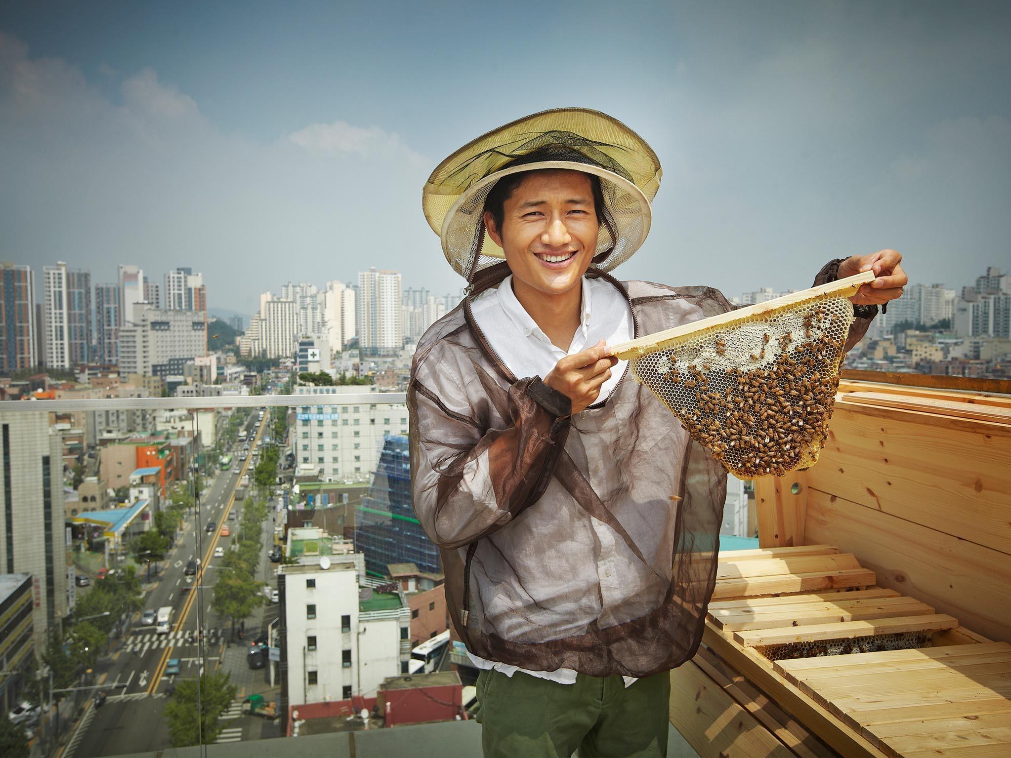 서울 옥상에서 꿀벌을 키우다,  어반비즈서울