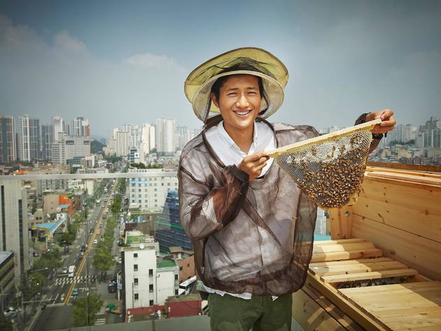 Urban Bees Seoul