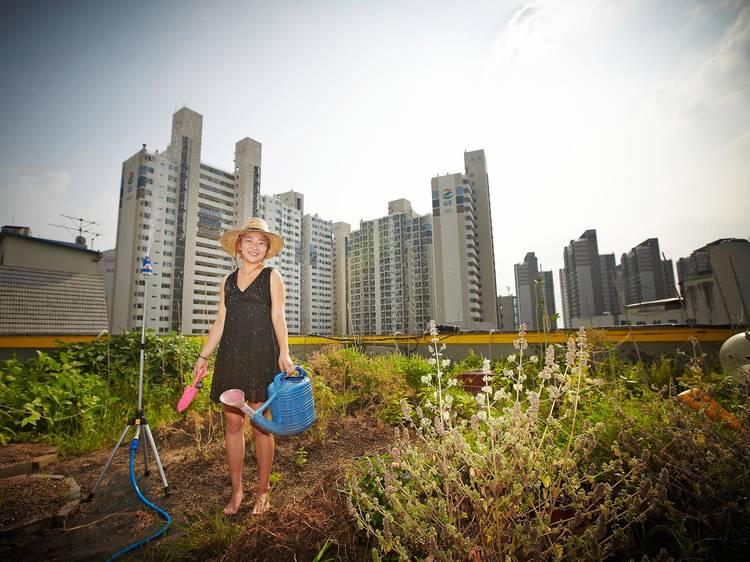 빌딩 옥상에서 농작물을 재배하는 '파릇한 절믄이'들