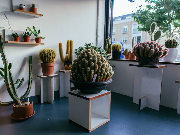 Prick: a shop selling cacti has opened in Dalston