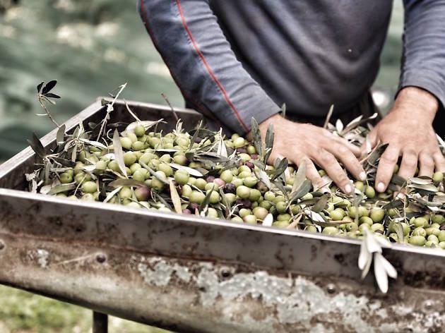Organic-Friendly Farmers' Market at Hotel Jen Orchardgateway