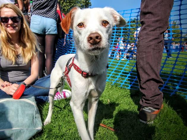 Victoria Park Dog Show