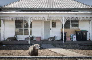Australian Life 2016 finalist The Lambs by Deborah Bonney