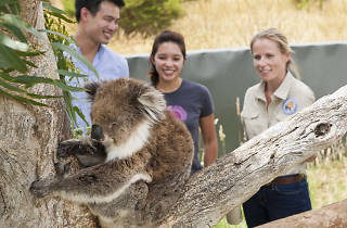 Ranger shows couple a koala