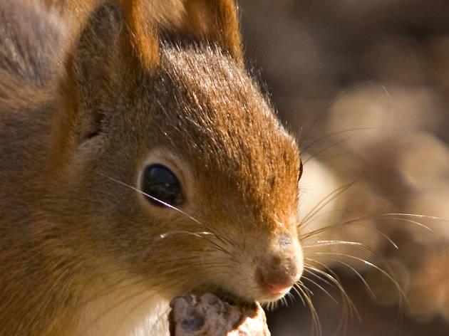 Esquilo em Monsanto