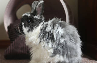 Willow the Rabbit SLOP