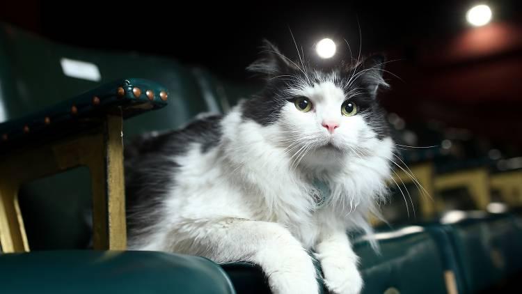 Duke the Cat SLOP