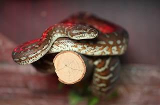 Abergail & Memphis Snakes SLOP
