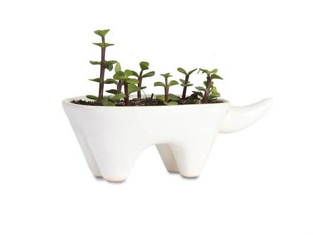 Plantas y macetas para niños