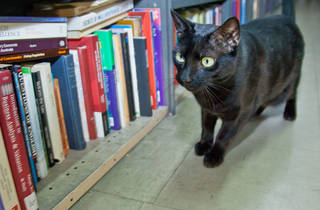 Oscar the black cat at Gould's Book Arcade SLOP