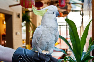 George the cockatoo at Friend in Hand SLOP
