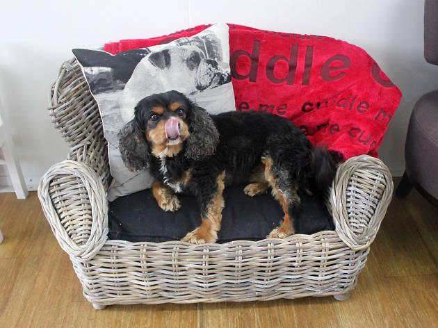 Dog-friendly hotels