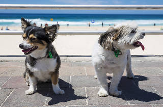 Layla and Alfie - Bondi Dogs